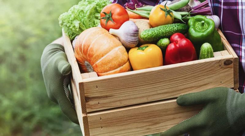 comprar dietética curativa